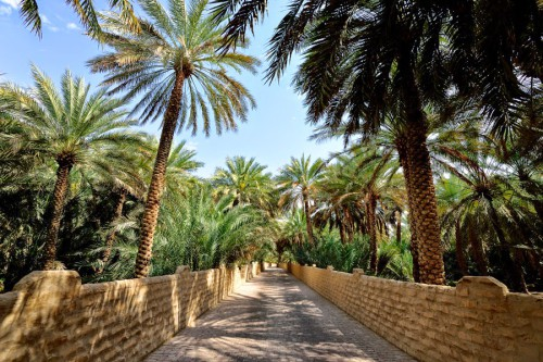117_al-ain-oasis