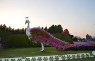 Miracle Garden, najväčšia záhrada v Dubaji