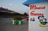 Miracle Garden Cafe Dubaj