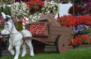 miracle garden atrakcie v Dubaji